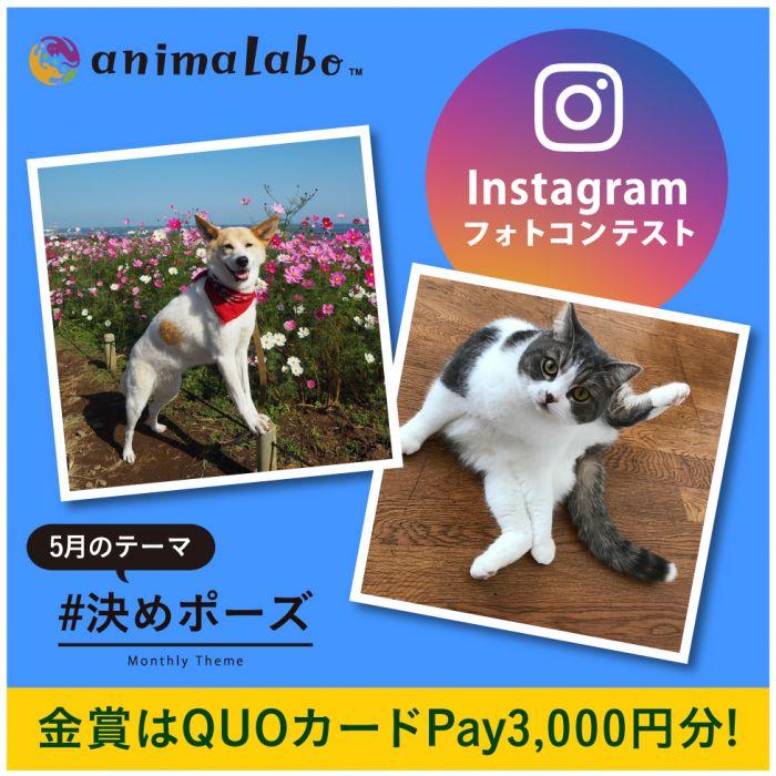 第34回Instagramフォトコンテスト「決めポーズ」