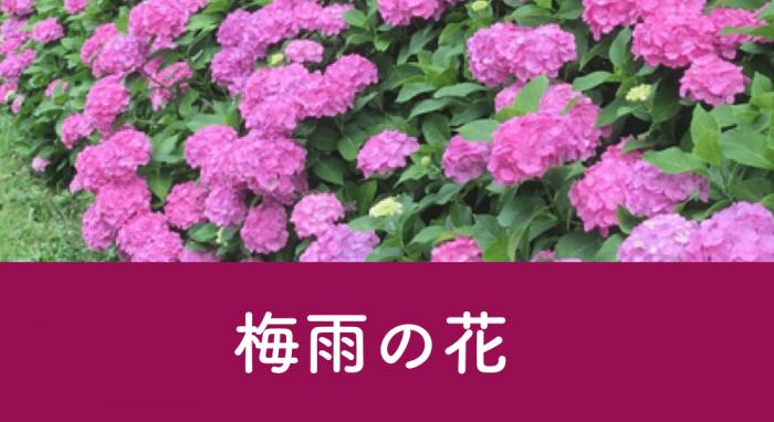 あなたの撮影した公園写真を募集中!PARKFULフォトイベント「梅雨の花」