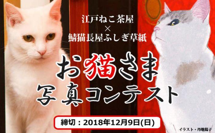 江戸ねこ茶屋×鯖猫長屋ふしぎ草紙 お猫さま写真コンテスト