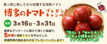 aaaaJA全農ふくれん 博多のトマトプレゼントキャンペーン