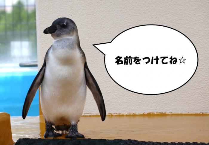 久留米市都市公園管理センター ペンギンの名前募集