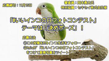 aaaa第8回愛鳥フォトコンテスト【#いいインコの日フォトコンテスト】