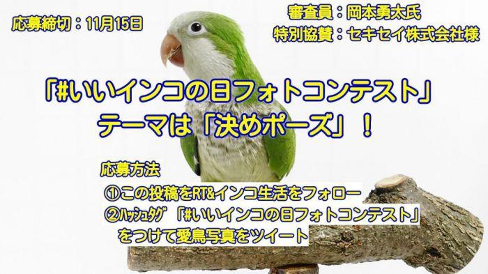 第8回愛鳥フォトコンテスト【#いいインコの日フォトコンテスト】