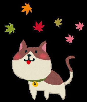 kouyou_cat