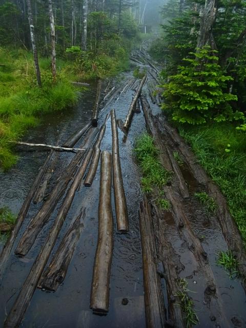 テント場のある双子池に向かいます。 しかし、登山道はこんな状態。 木が浮いてます。 これ、どこを歩けというのでしょうか。