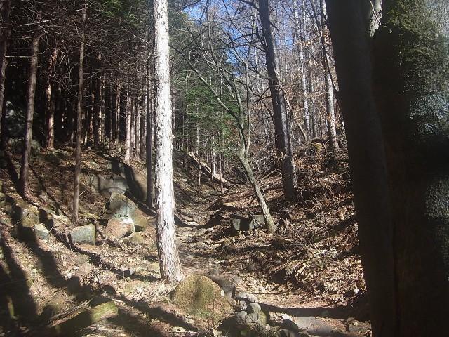 今回は茅ヶ岳。 日本百名山でおなじみの、深田久弥先生が亡くなった山です。 とにかくひたすら樹林帯を行きます。
