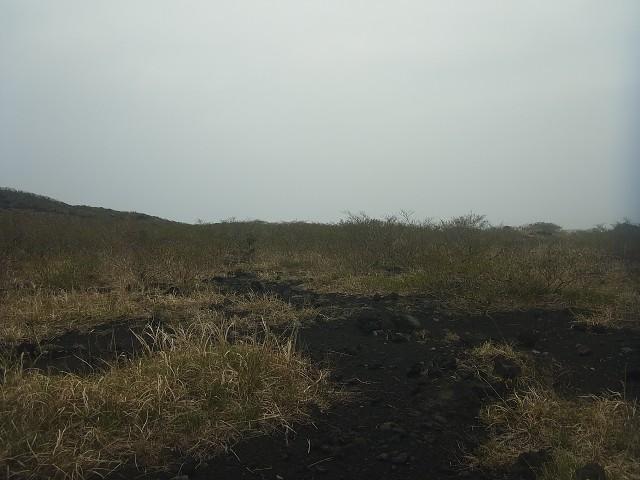 三原山から離れるにつれ、植物が大きく育っています。 活火山ではよく見られる光景ですね。
