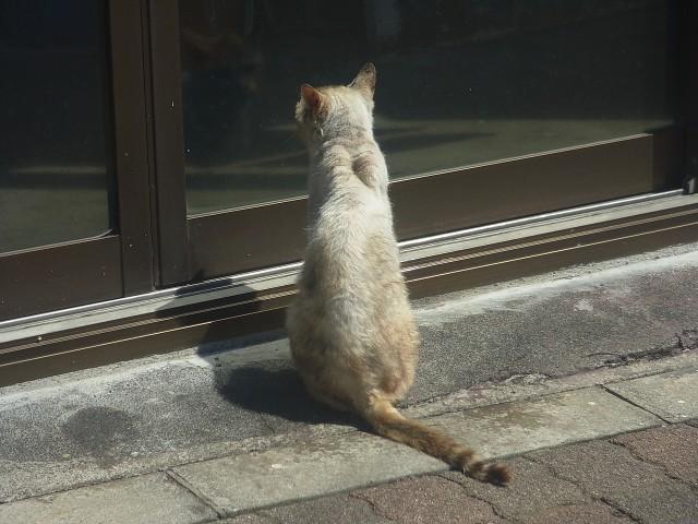 島ではよくある光景。 商店ドア待ちの猫。 誰かが開けてくれるまで、辛抱強く待っているのです。