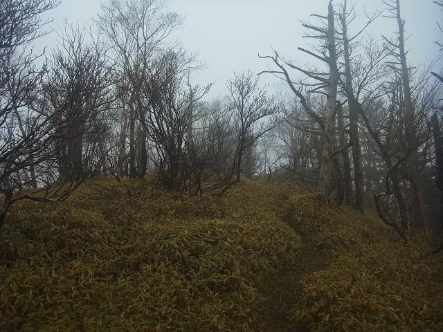 ガスのせいで、樹林帯も不気味な感じになっています。