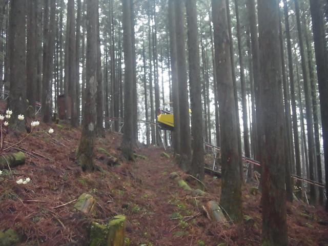 これ、観光用のモノレールでした。 山の中をぐるっと一周する、いわば電動森林浴ですかね。 なので、途中駅というものがありません。 えっ、乗せてくれないの。