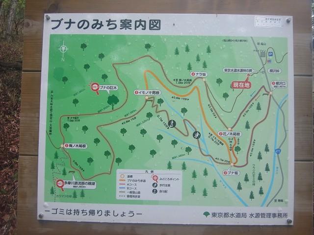 ここからしばらくは、一般登山道。 よく整備された快適な道が続きます。