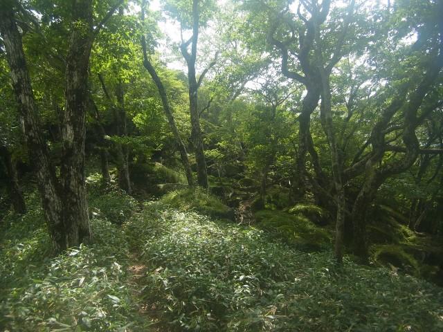 しばらくの間、ひたすら樹林帯の中を歩く。
