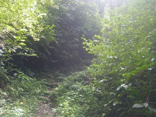 若干藪っぽい道を登っていくと。