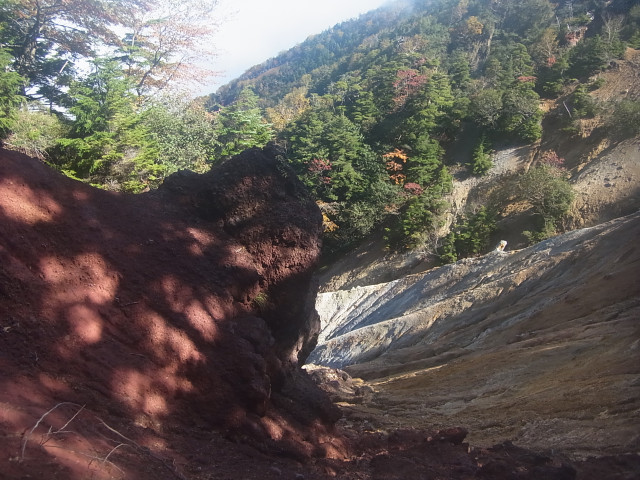 ただ、登山道の左右は、こんな状態。 下りて行けそうにも見えますが。