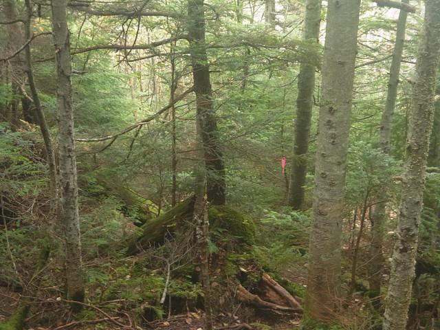標高が下がってくると、樹林地帯に。