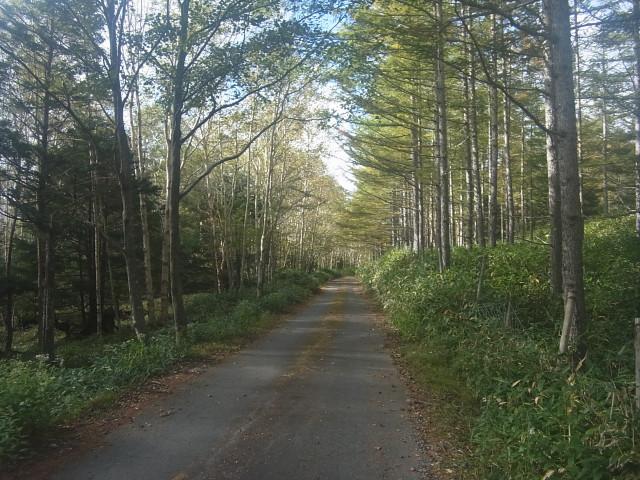 ここから長い長い林道歩き。 約2時間。 これがけっこう面倒なのです。