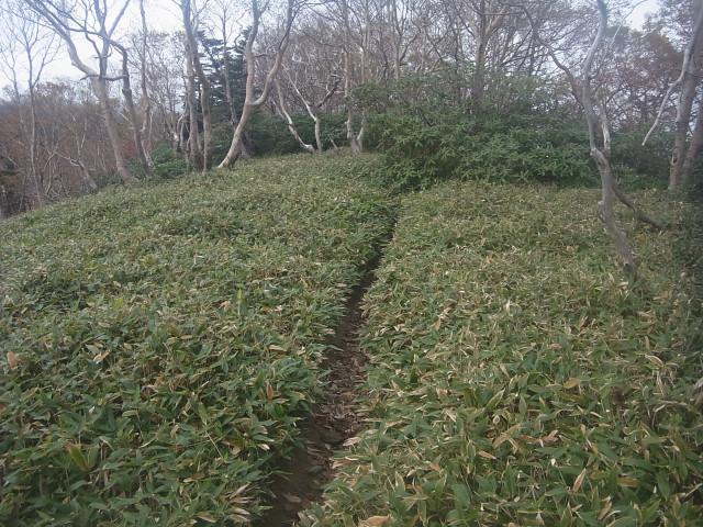 快適な道を歩いて。 あとは下山するだけ。