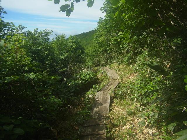 最初のうちは樹林帯の中の木道。