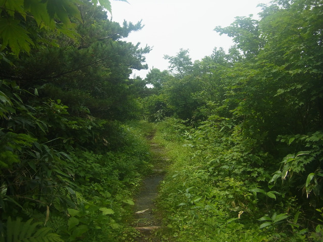 まずは観松平を周遊。ひたすらいろんな松を見て歩くというもの。