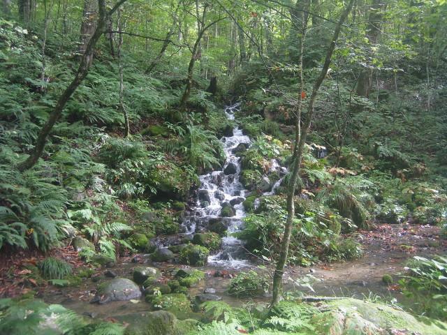 奥入瀬川に流れ込む滝が多かった。 とにかくたくさんの滝を見て歩くことに。