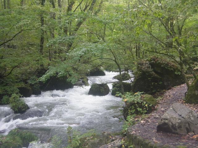 奥入瀬のいいところは、遊歩道と川面の高低差がほとんどないところ。 川の流れを低い目線で楽しめます。 これは他では見られない光景なのです。