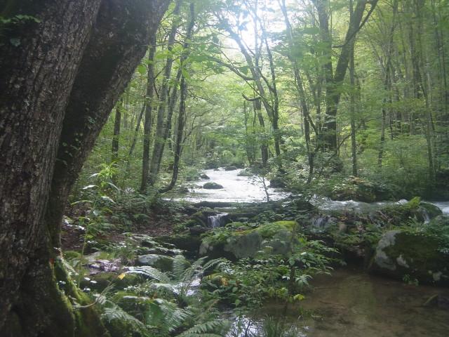 大雨の後だというのに、そんなに流れも急じゃなく。穏やかに流れていきます。 とにかく雰囲気があるのです。