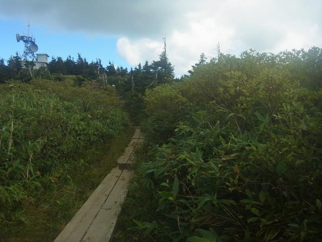 木道を行きます。