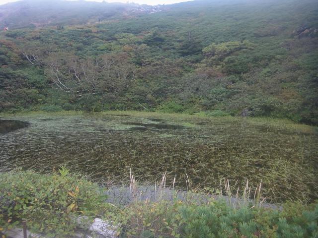 ここは鏡沼。 爆裂火口に水が溜まった場所です。 そう、火山なのですよね。