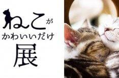 「ねこがかわいいだけ展」に展示!かわいい猫写真を募集